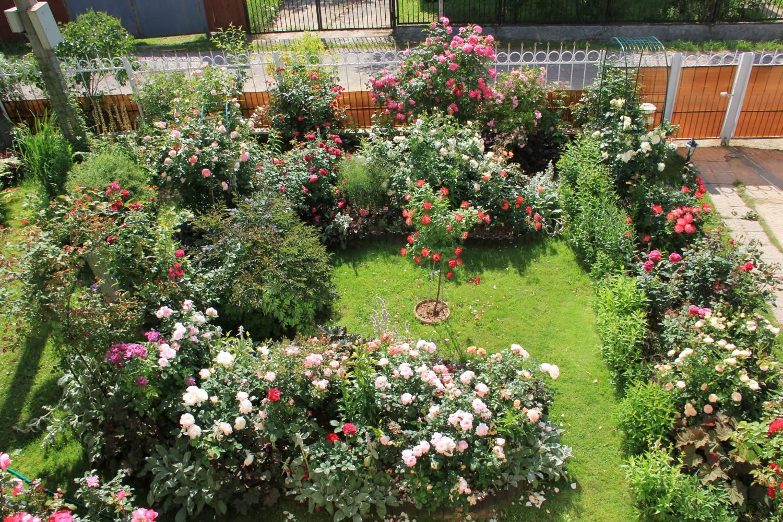 Клумба из роз своими руками на даче фото